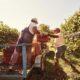 Contadini nelle vigne.