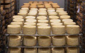 Cinque formaggi piemontesi tipici DOP